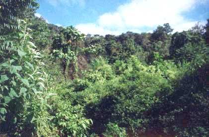 conozcan los bosques tropicales mas ricos en naturaleza